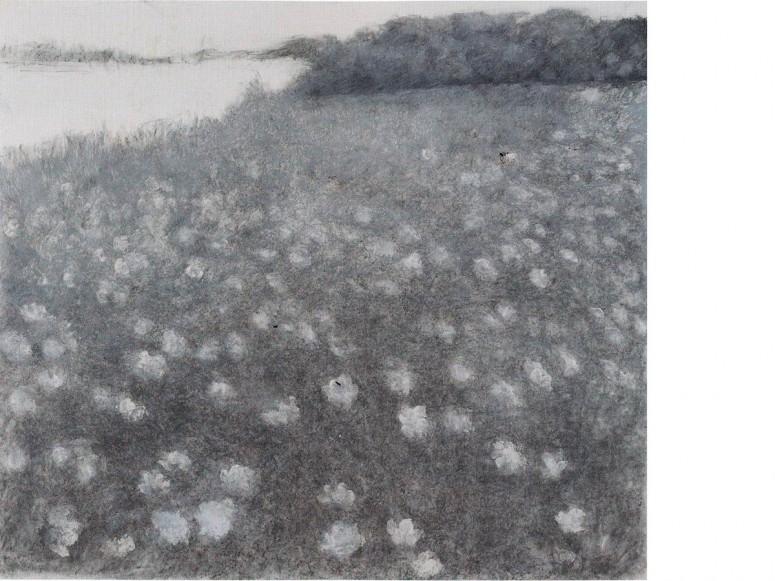 Wilde Möhre 2009, Kohle und Kreide auf Papier